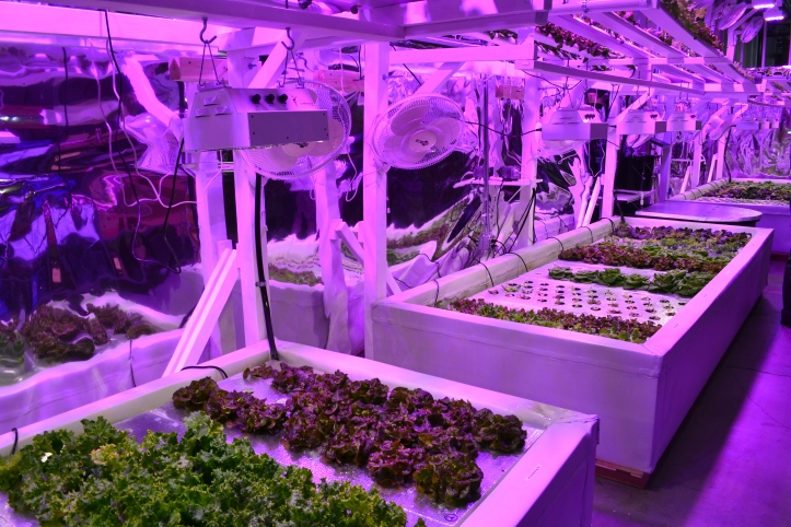 The Millionair Club Charity's Hydroponic Demonstration Garden.